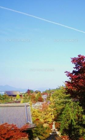 秋の飛行機雲の素材 [FYI00164412]
