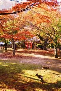 宮島の秋の素材 [FYI00164425]
