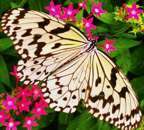 花と蝶の素材 [FYI00164455]