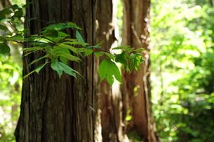 木々の緑の写真素材 [FYI00164564]