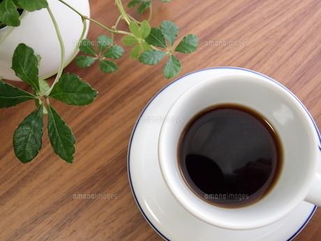 コーヒーと観葉植物の写真素材 [FYI00164734]