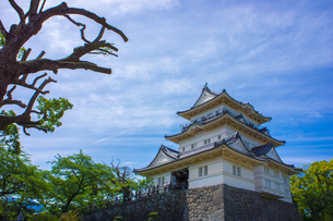 小田原城の写真素材 [FYI00164768]