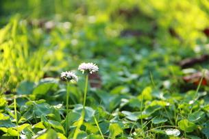 道端に咲く二輪の花  の写真素材 [FYI00164861]