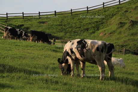 牧場の写真素材 [FYI00164932]