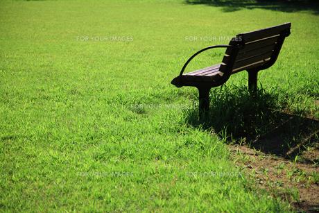 ベンチと芝生の素材 [FYI00165061]