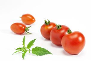 夏野菜・ミニトマトの写真素材 [FYI00165146]