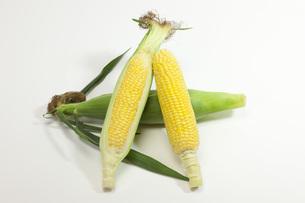 夏野菜・とうもろこしの写真素材 [FYI00165251]