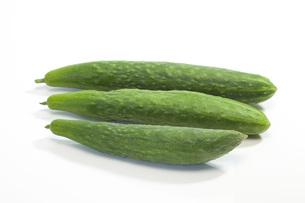 夏野菜・キュウリの写真素材 [FYI00165267]