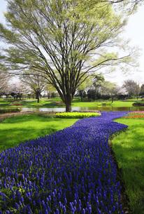 花咲く公園の写真素材 [FYI00165415]