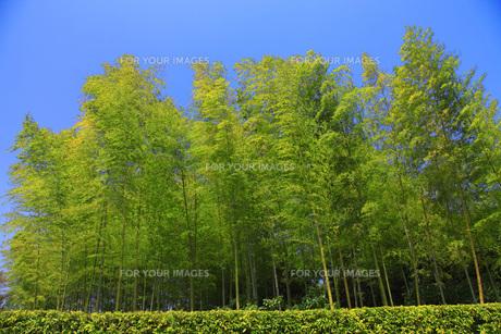 竹林の素材 [FYI00165691]