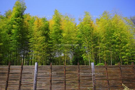竹塀と竹林の素材 [FYI00165707]