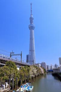 東京スカイツリーの写真素材 [FYI00165906]