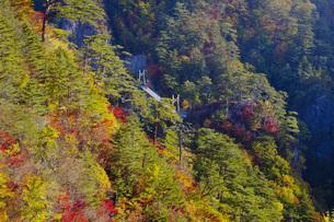 秋の瀬戸合峡の写真素材 [FYI00166002]