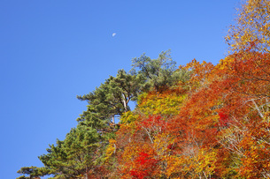 秋色に染まる木々の写真素材 [FYI00166008]