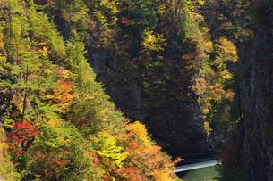 秋の瀬戸合峡の写真素材 [FYI00166009]
