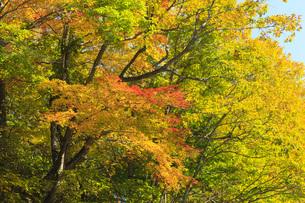 秋色に染まる木々の写真素材 [FYI00166012]