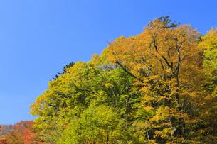 秋色に染まる木々の写真素材 [FYI00166014]