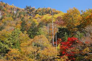 秋色に染まる木々の写真素材 [FYI00166016]