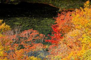 秋の塩原渓谷の写真素材 [FYI00166018]