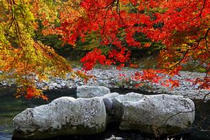 秋の塩原渓谷の写真素材 [FYI00166019]
