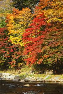 秋の塩原渓谷の写真素材 [FYI00166020]