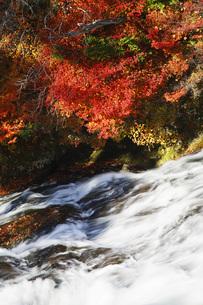 秋の日光竜頭の滝の写真素材 [FYI00166022]