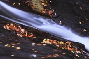 秋の塩原渓谷の写真素材 [FYI00166024]