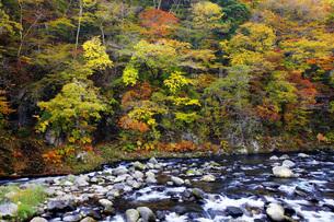 秋の塩原渓谷の写真素材 [FYI00166029]