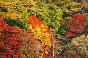 秋の塩原渓谷の写真素材 [FYI00166030]