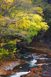 秋の塩原渓谷の写真素材 [FYI00166031]