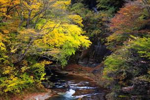 秋の塩原渓谷の写真素材 [FYI00166033]