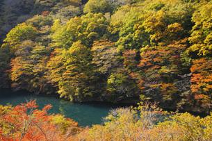 秋の塩原渓谷の写真素材 [FYI00166034]