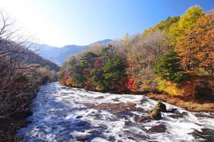 秋の日光竜頭の滝の写真素材 [FYI00166036]