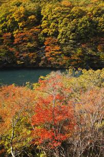 秋の塩原渓谷の写真素材 [FYI00166038]