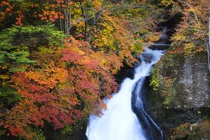 秋の日光竜頭の滝の写真素材 [FYI00166042]