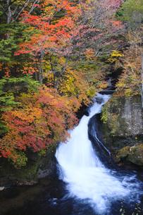 秋の日光竜頭の滝の写真素材 [FYI00166044]