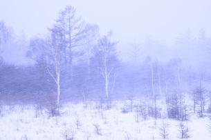 栃木県・冬の日光戦場ヶ原の写真素材 [FYI00166075]
