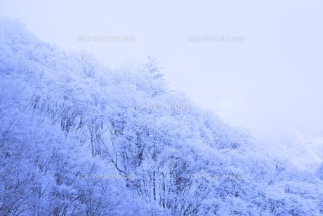 冬の樹木の素材 [FYI00166084]