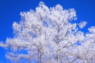冬の樹木の素材 [FYI00166090]
