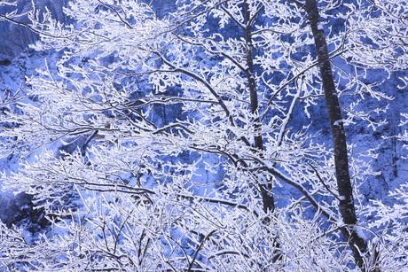 冬の樹木の素材 [FYI00166098]
