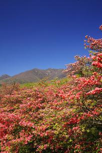 山ツツジ咲く那須高原の写真素材 [FYI00166124]