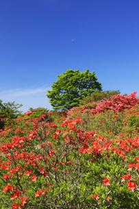 レンゲツツジ咲く那須高原の写真素材 [FYI00166138]