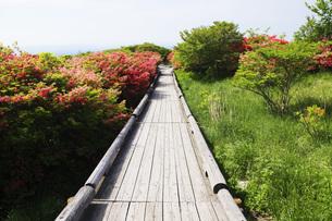 山ツツジ咲く那須高原の写真素材 [FYI00166150]