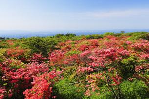 山ツツジ咲く那須高原の写真素材 [FYI00166151]