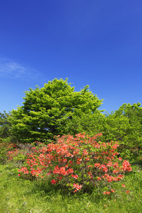 レンゲツツジ咲く那須高原の写真素材 [FYI00166153]