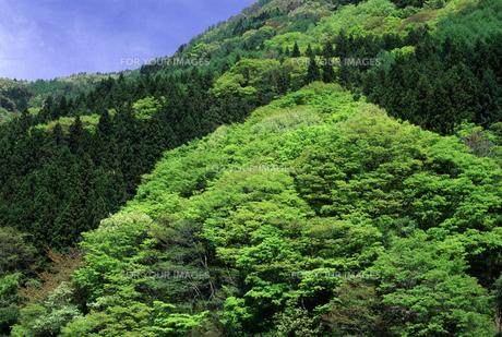 信州・聖高原の新緑の素材 [FYI00166155]
