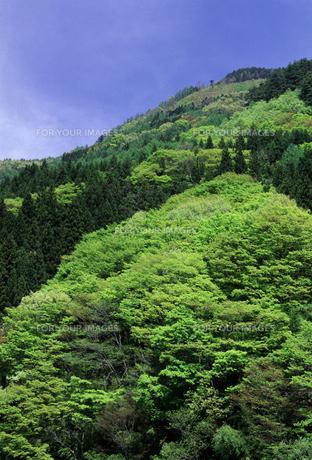 信州・聖高原の新緑の素材 [FYI00166162]