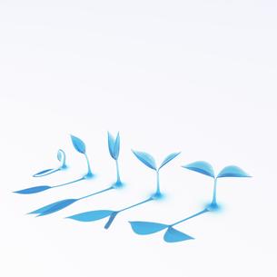 成長する青い透明な双葉の写真素材 [FYI00166294]