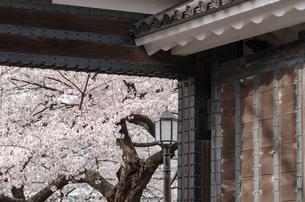 田安門と満開の桜の写真素材 [FYI00166350]