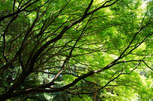 木と木漏れ日の写真素材 [FYI00166363]